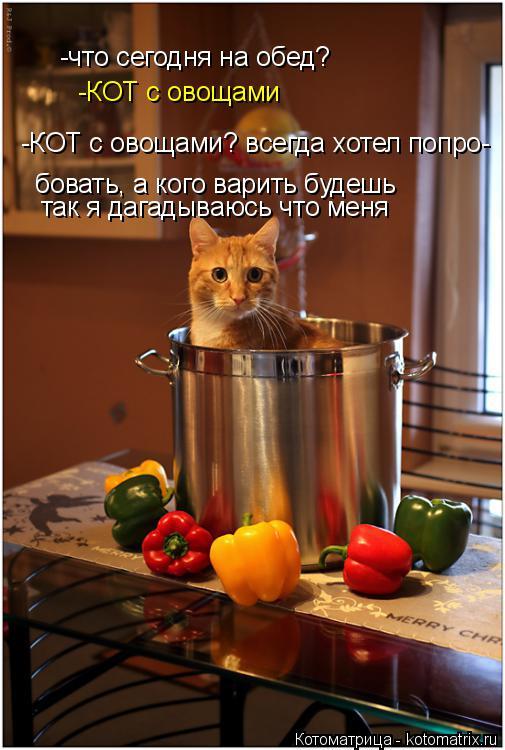 Котоматрица: -что сегодня на обед? -КОТ с овощами -КОТ с овощами? всегда хотел попро- бовать, а кого варить будешь так я дагадываюсь что меня