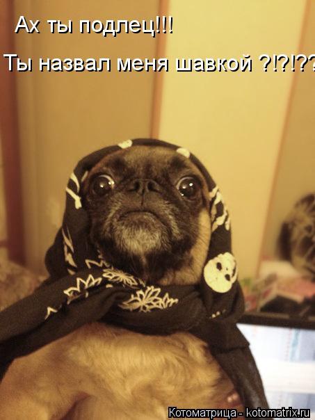 Котоматрица: Ах ты подлец!!! Ты назвал меня шавкой ?!?!??!