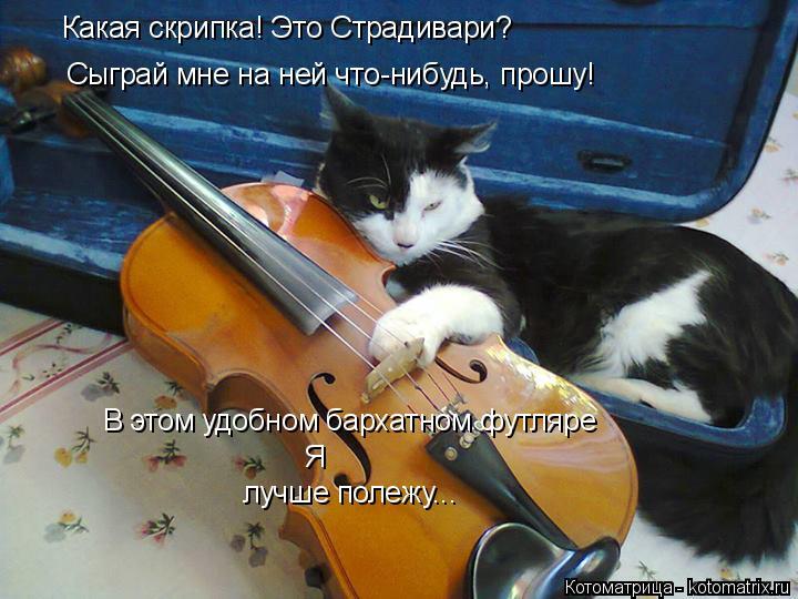 Котоматрица: Какая скрипка! Это Страдивари? Сыграй мне на ней что-нибудь, прошу! В этом удобном бархатном футляре Я  лучше полежу...