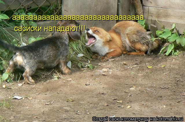 Котоматрица: ааааааааааааааааааааааааааааааа сасиски нападают!!!