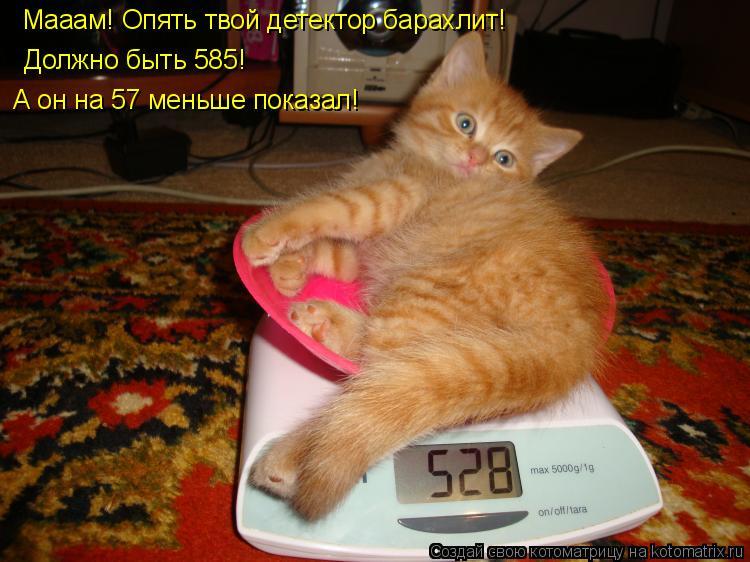 Котоматрица: Мааам! Опять твой детектор барахлит! Должно быть 585!  А он на 57 меньше показал!