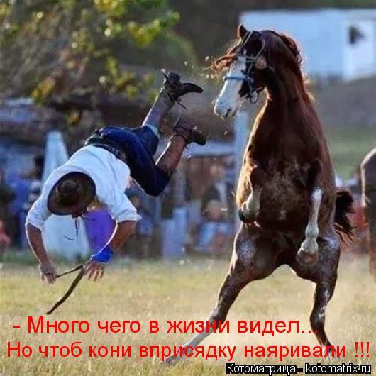 Котоматрица: - Много чего в жизни видел... Но чтоб кони вприсядку наяривали !!!