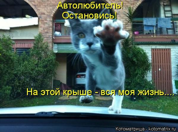 Котоматрица: Автолюбитель! Остановись! На этой крыше - вся моя жизнь....