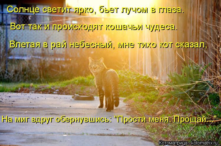 Котоматрица: Солнце светит ярко, бьет лучом в глаза. Вот так и происходят кошачьи чудеса. Влетая в рай небесный, мне тихо кот сказал, На миг вдруг обернувш