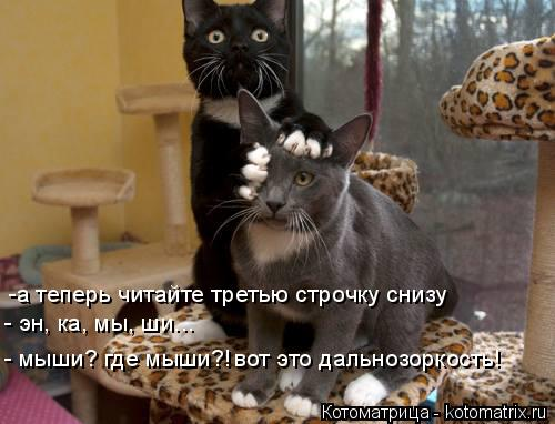 Котоматрица: -а теперь читайте третью строчку снизу - эн, ка, мы, ши... - мыши? где мыши?! вот это дальнозоркость!