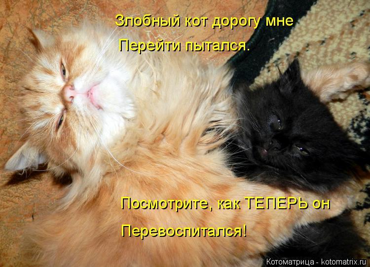 Котоматрица: Злобный кот дорогу мне Перейти пытался. Посмотрите, как ТЕПЕРЬ он Перевоспитался!
