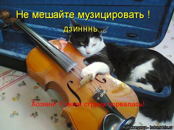 Котоматрица: Не мешайте музицировать ! Хозяин! У меня струна порвалась! дзинннь...