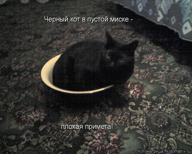 Котоматрица: Черный кот в пустой миске -  плохая примета!