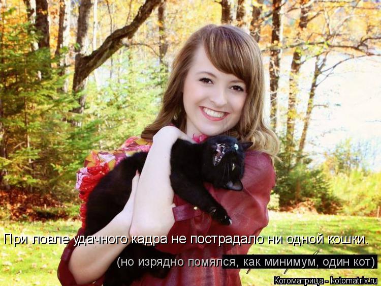 Котоматрица: При ловле удачного кадра не пострадало ни одной кошки. (но изрядно помялся, как минимум, один кот)
