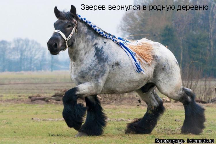 Котоматрица: Зверев вернулся в родную деревню