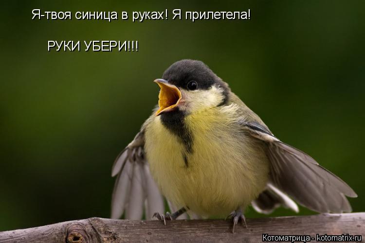 Котоматрица: Я-твоя синица в руках! Я прилетела! РУКИ УБЕРИ!!!