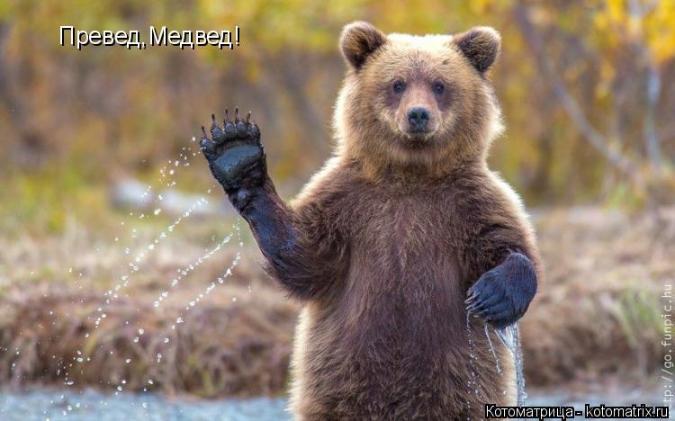 Котоматрица: Превед,Медвед!