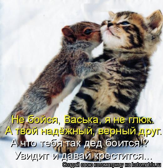 Котоматрица: Не бойся, Васька, я не глюк. А твой надёжный, верный друг. А что тебя так дед боится!? Увидит и давай крестится...