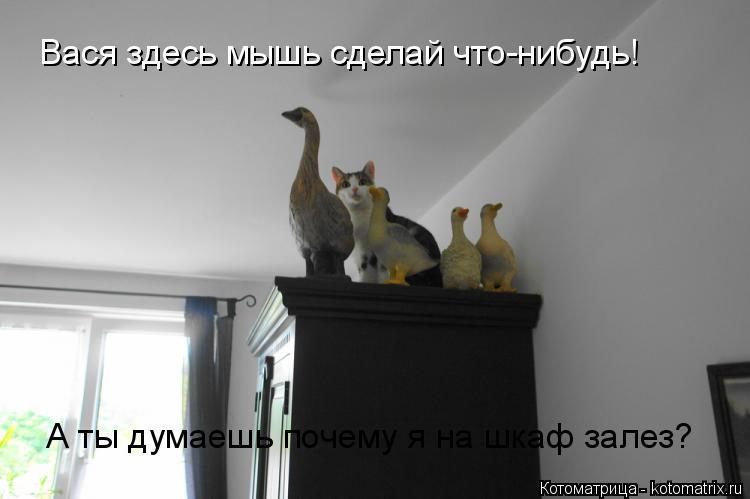 Котоматрица: Вася здесь мышь сделай что-нибудь! А ты думаешь почему я на шкаф залез?