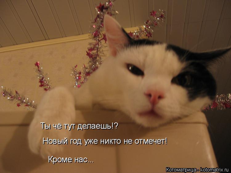 Котоматрица: Ты чё тут делаешь!? Новый год уже никто не отмечет! Кроме нас...