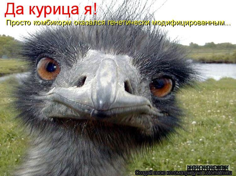 Котоматрица: Да курица я! Просто комбикорм оказался генетически модифицированным... ЖЖЖЖЖЖ ЕЕЕЕЕЕЕЕ ЕЕЕЕЕЕЕЕ