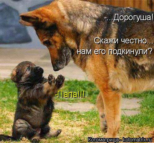 Котоматрица: -Папа!!! -...Дорогуша!  Скажи честно...  нам его подкинули?