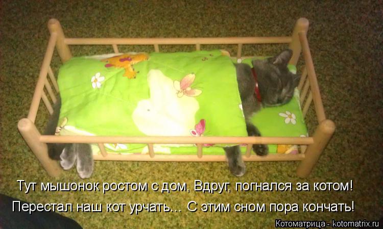 Котоматрица: Тут мышонок ростом с дом, Вдруг, погнался за котом! Перестал наш кот урчать… С этим сном пора кончать!