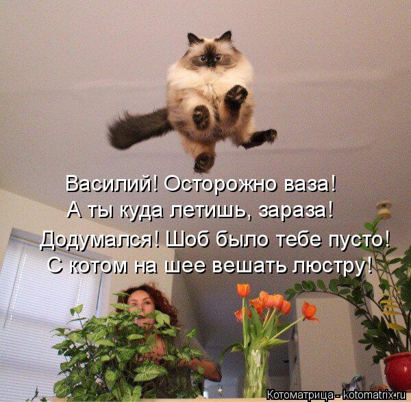 Котоматрица: Василий! Осторожно ваза! А ты куда летишь, зараза! С котом на шее вешать люстру! Додумался! Шоб было тебе пусто!