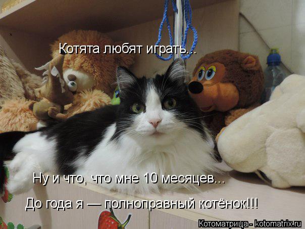 Котоматрица: Котята любят играть... Ну и что, что мне 10 месяцев... До года я — полноправный котёнок!!!