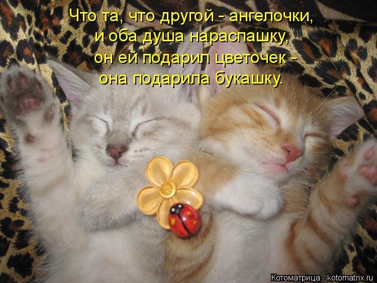 Котоматрица: Что та, что другой - ангелочки, и оба душа нараспашку, он ей подарил цветочек -  она подарила букашку.