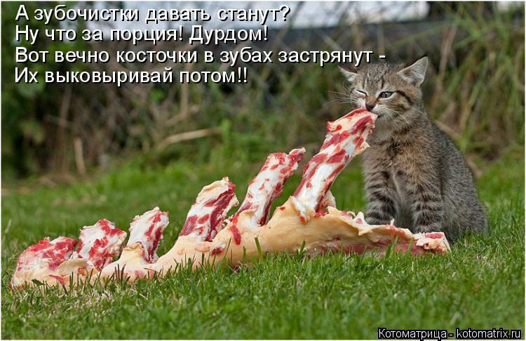 Котоматрица: Ну что за порция! Дурдом! Вот вечно косточки в зубах застрянут -  Их выковыривай потом!! А зубочистки давать станут?