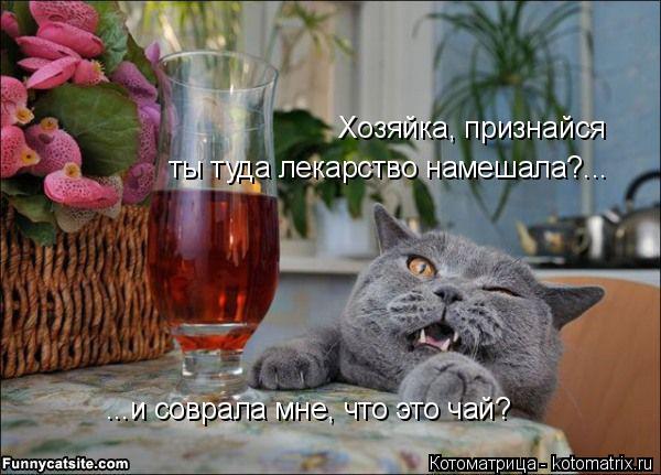 Котоматрица: Хозяйка, признайся ты туда лекарство намешала?... ...и соврала мне, что это чай?