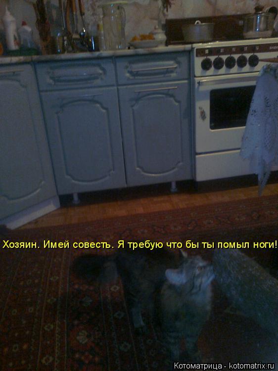 Котоматрица: Хозяин. Имей совесть. Я требую что бы ты помыл ноги!