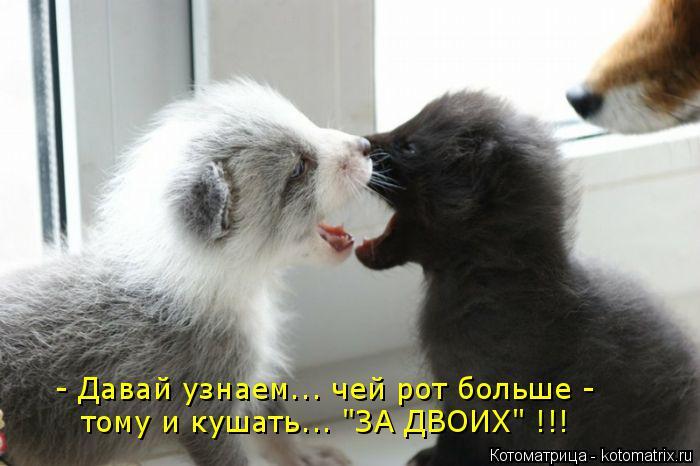 """Котоматрица: - Давай узнаем... чей рот больше - тому и кушать... """"ЗА ДВОИХ"""" !!!"""