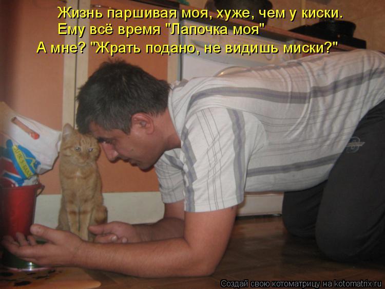 """Котоматрица: Жизнь паршивая моя, хуже, чем у киски. Ему всё время """"Лапочка моя"""" А мне? """"Жрать подано, не видишь миски?"""""""