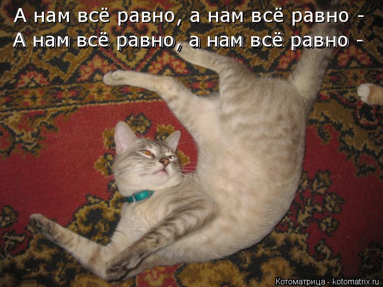 Котоматрица: А нам всё равно, а нам всё равно - пусть катаемся по полу вдвоём!) А нам всё равно, а нам всё равно -  А нам всё равно, а нам всё равно -  А нам всё р
