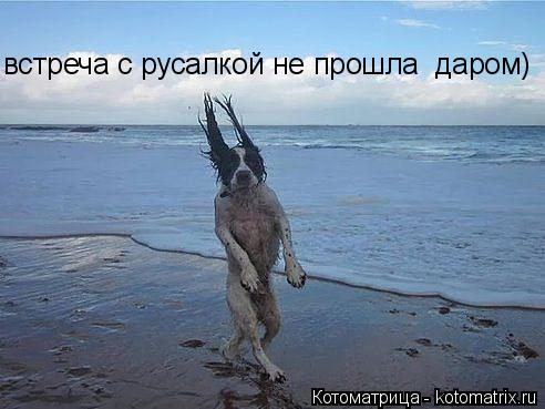 Котоматрица: встреча с русалкой не прошла  даром)