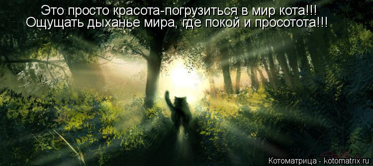 http://kotomatrix.ru/images/lolz/2014/01/19/kotomatritsa_K_.jpg