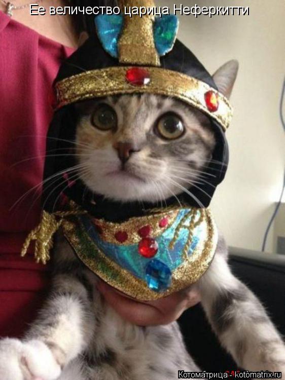 Котоматрица: Ее величество царица Неферкитти
