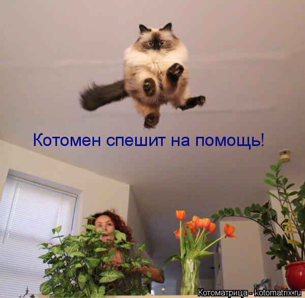 Котоматрица: Котомен спешит на помощь!