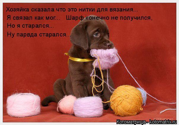 Котоматрица: Хозяйка сказала что это нитки для вязания... Я связал как мог... Шарф конечно не получился, Но я старался... Ну парвда старался...