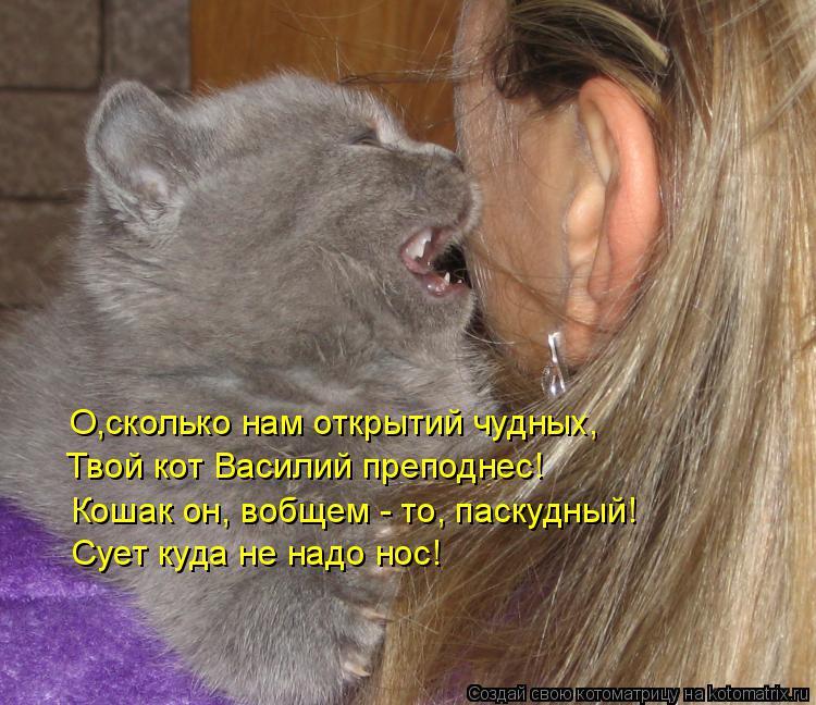 Котоматрица: О,сколько нам открытий чудных, Твой кот Василий преподнес! Кошак он, вобщем - то, паскудный! Сует куда не надо нос!