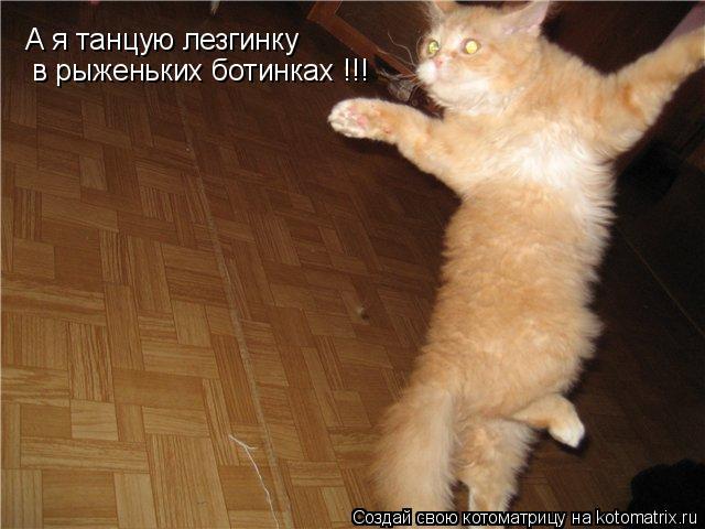Котоматрица: А я танцую лезгинку в рыженьких ботинках !!!
