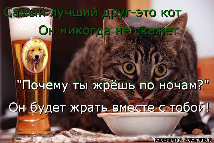 """Котоматрица: Самый лучший друг-это кот Он никогда не скажет """"Почему ты жрёшь по ночам?"""" """"Почему ты жрёшь по ночам?"""" Он будет жрать вместе с тобой!"""