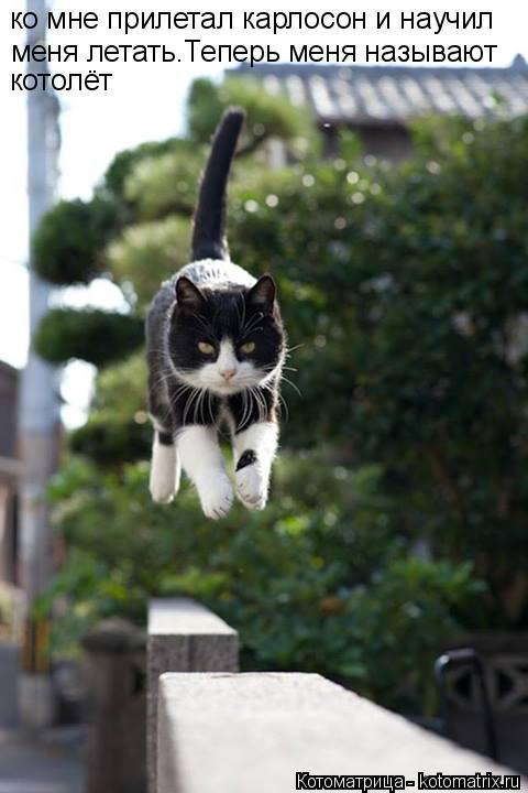 Котоматрица: ко мне прилетал карлосон и научил меня летать.Теперь меня называют  котолёт