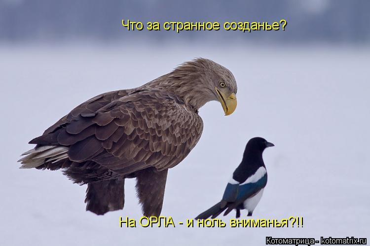 Котоматрица: Что за странное созданье? На ОРЛА - и ноль вниманья?!!