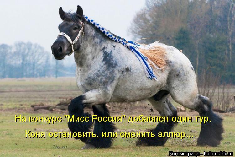 """Котоматрица: На конкурс """"Мисс Россия"""" добавлен один тур. Коня остановить, или сменить аллюр..."""