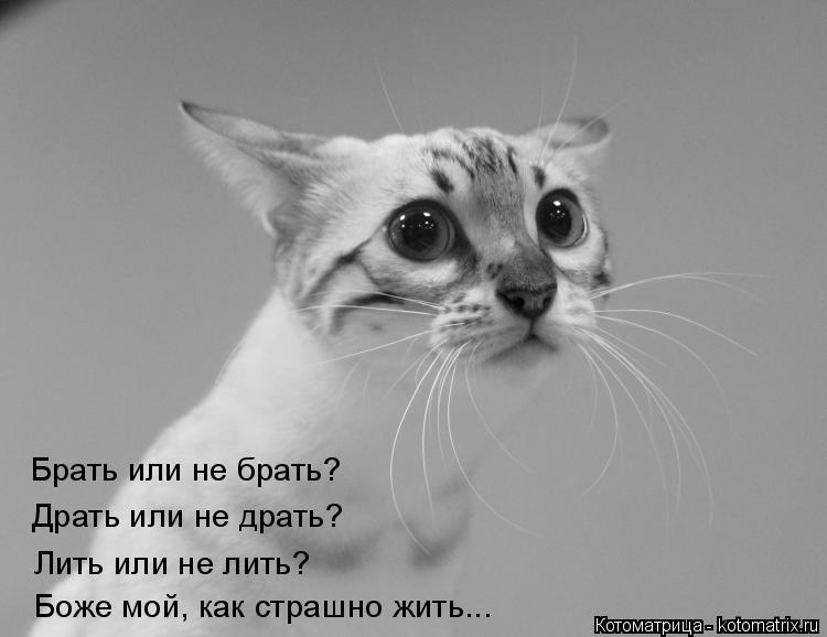 Котоматрица: Брать или не брать? Драть или не драть? Лить или не лить? Боже мой, как страшно жить...