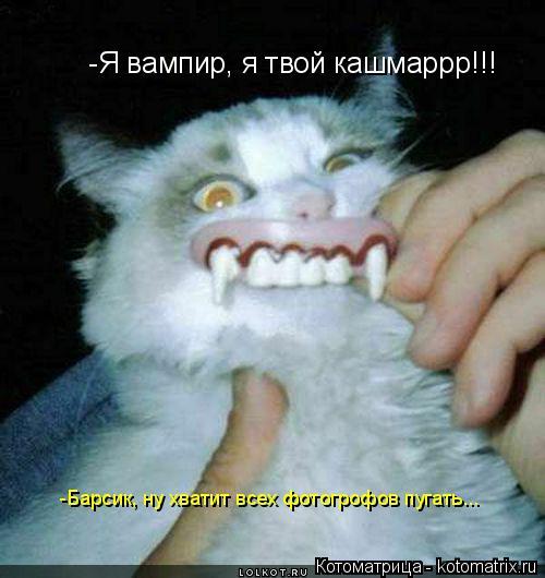 Котоматрица: -Я вампир, я твой кашмаррр!!!  -Барсик, ну хватит всех фотогрофов пугать...