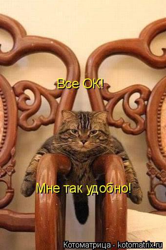 Котоматрица: Все ОК! Мне так удобно!