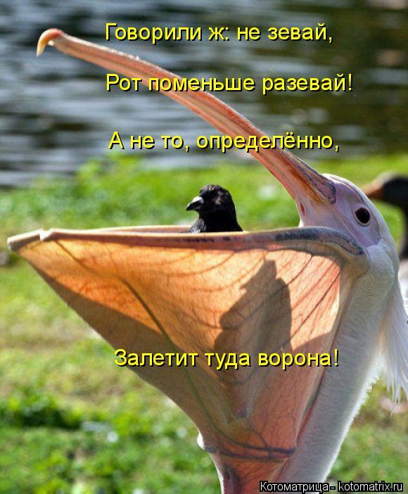 Котоматрица: Говорили ж: не зевай, Рот поменьше разевай! А не то, определённо, Залетит туда ворона!