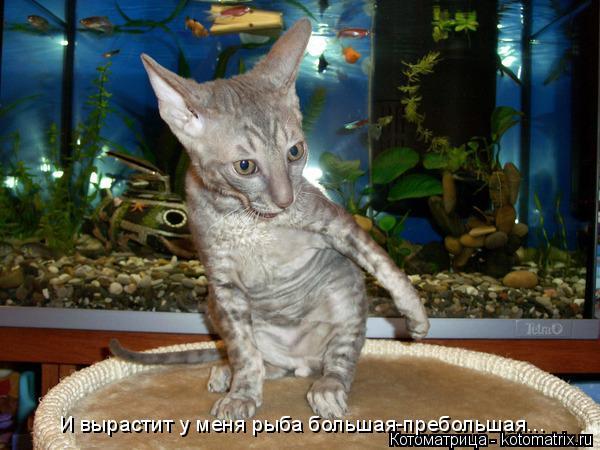 Котоматрица: И вырастит у меня рыба большая-пребольшая...