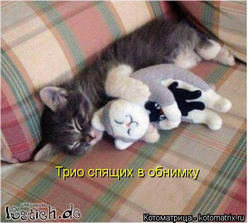 Котоматрица: Трио спящих в обнимку