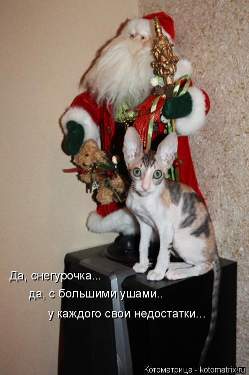 Котоматрица: Да, снегурочка...да, с большими ушами.. у каждого свои недостатки... Да, снегурочка... да, с большими ушами..  у каждого свои недостатки...