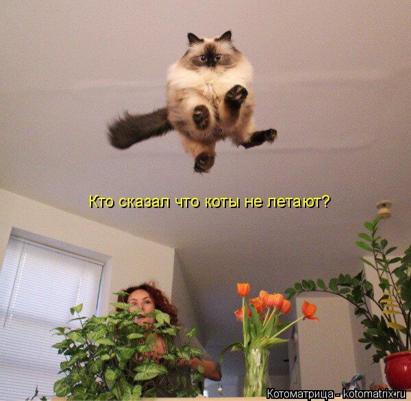 Котоматрица: Кто сказал что коты не летают?